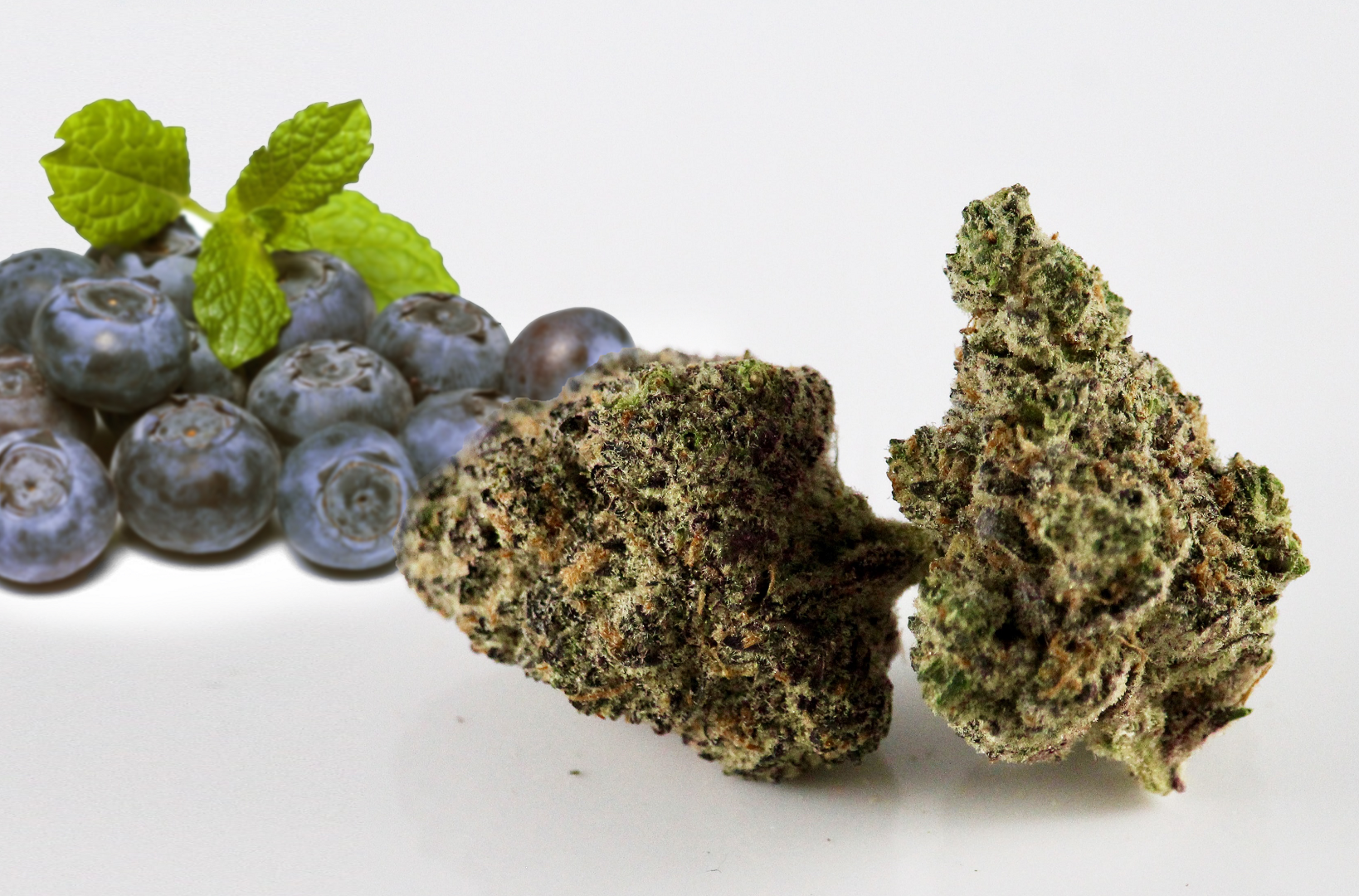 Haze Berry cannabis strain in front of blueberries
