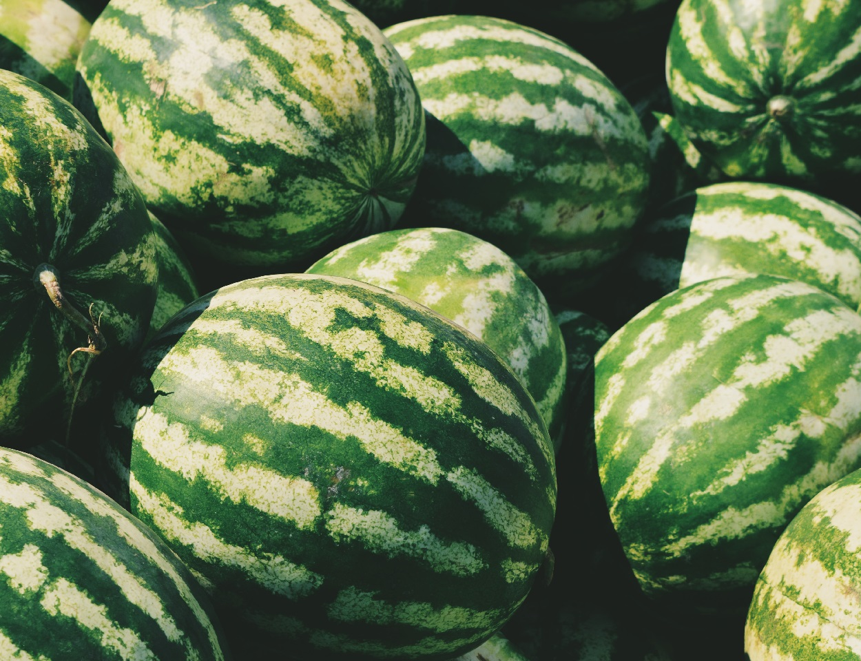 A pile of Oregon watermelons