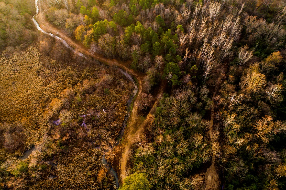 A bird's eye view of a forest in Alabama