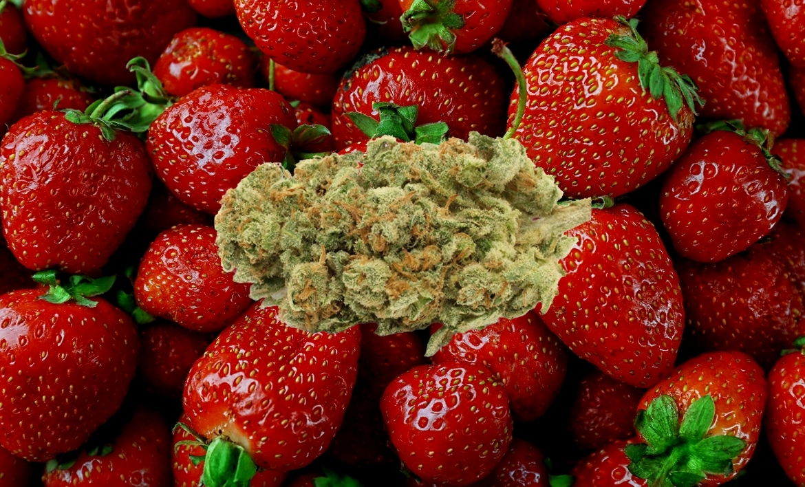 Strawberry Ghost Strain of cannabis hovers above a background of fresh strawberries