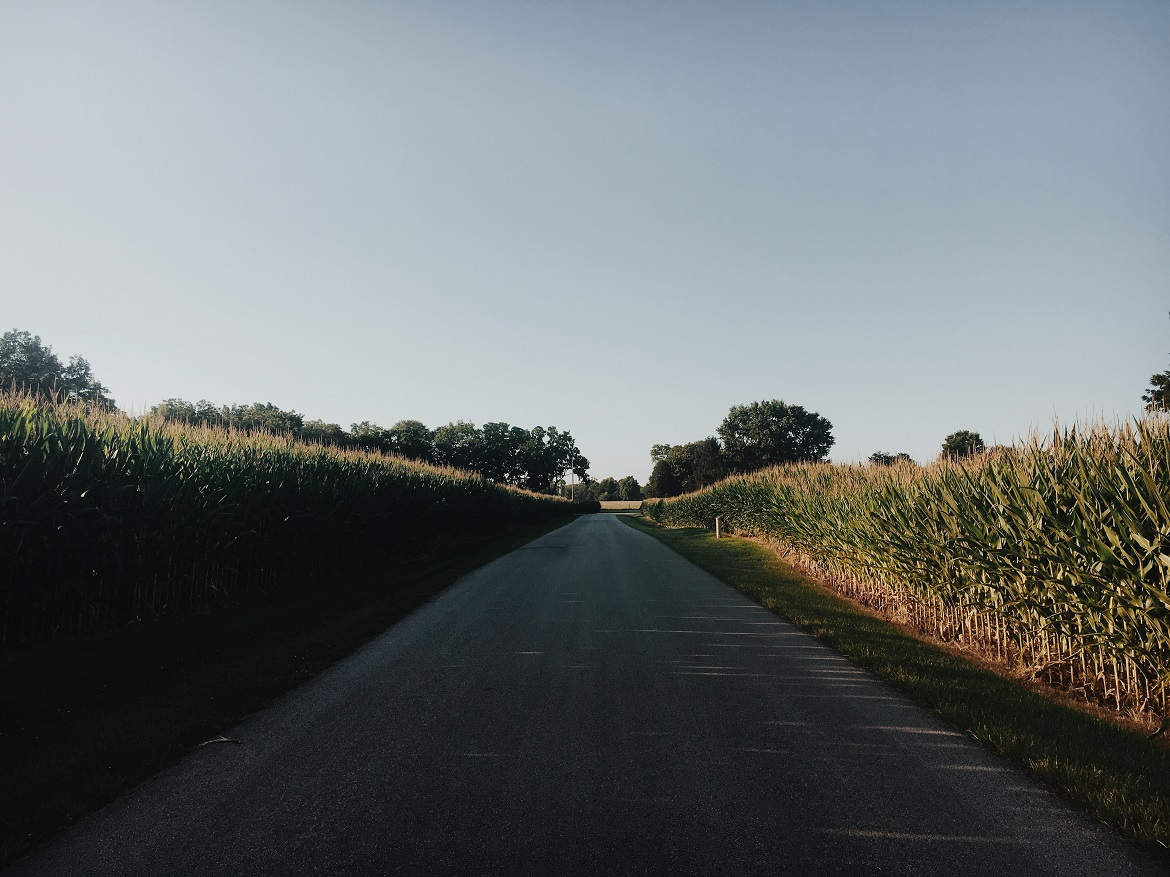A country road in Kentucky
