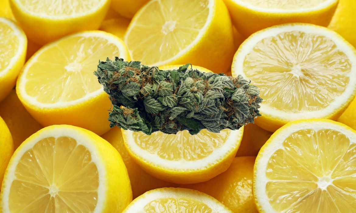 A cannabis nug of the lemon bubba strain hovers above a pile of juicy lemons