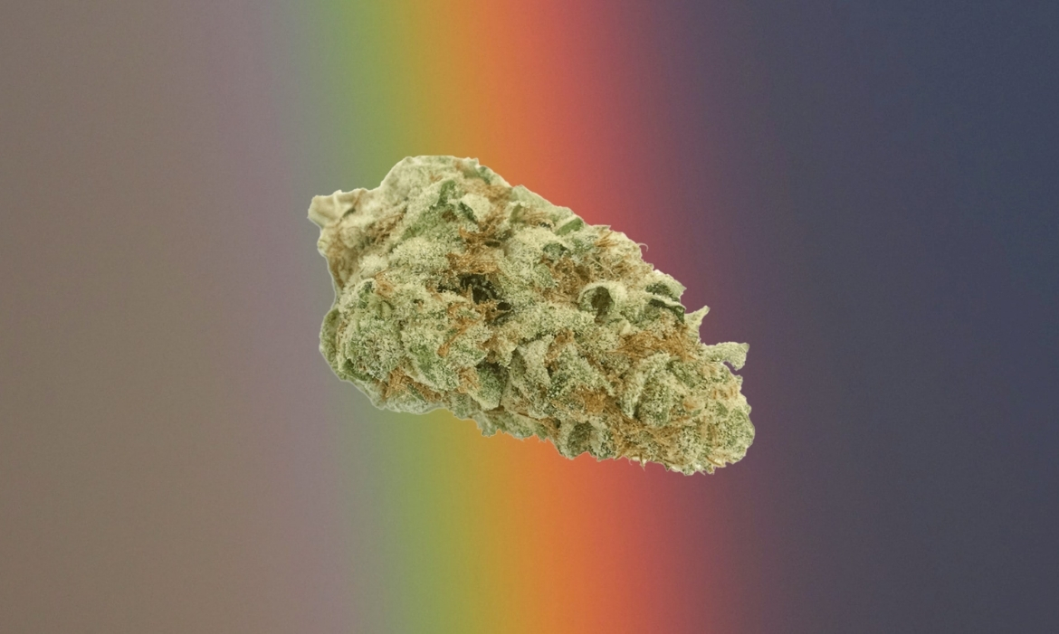 A beautiful cannabis nug of the strain rainbow cookiesfloats above a rainbow backdrop