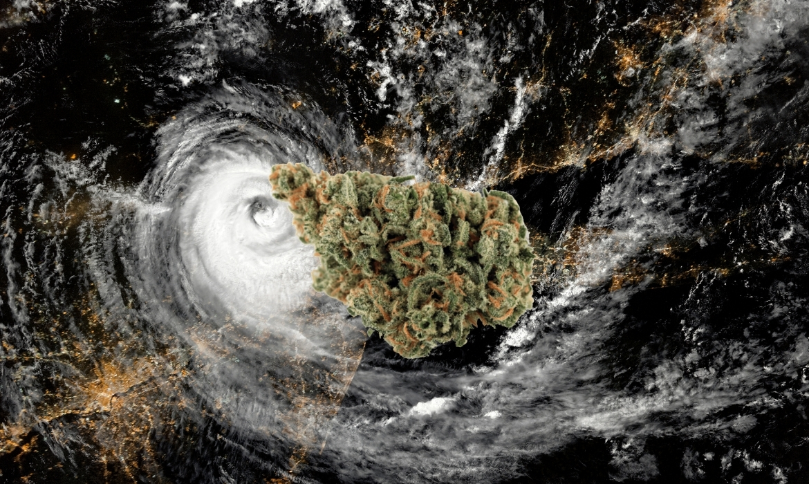 A beautiful green nug of the slurricane strain hovers above a hurricane map