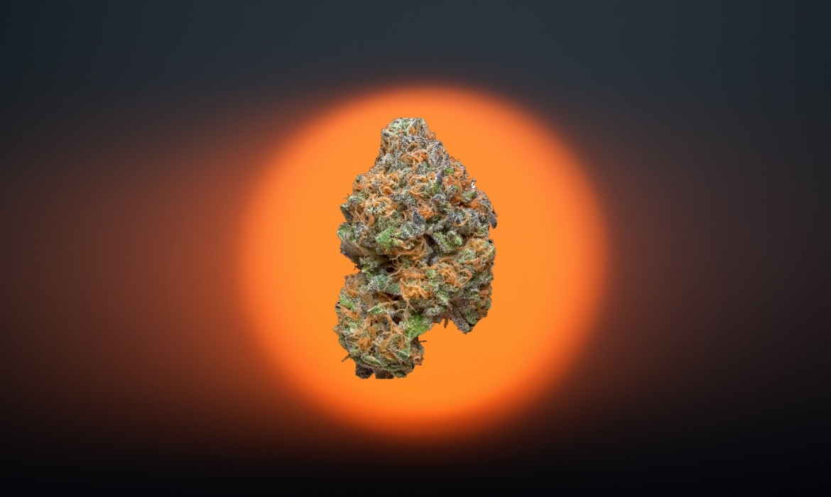 Sour Sunshine cannabis strain hovers above a sunset background