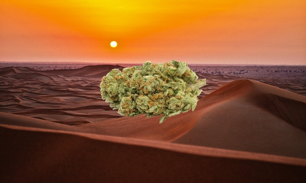 A beautiful nug of the western sunset strain hovers above the desert
