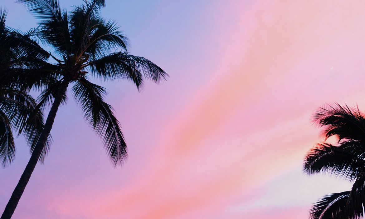 Palm trees during a sunset in Hawaii